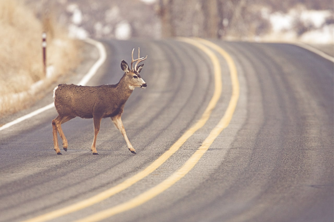 deer season safety | hibbs insurance