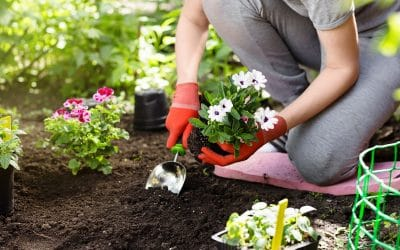 Tips for Spring Planting