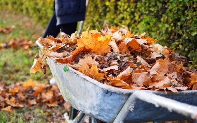 Tips for Tidying Up the Yard in Autumn