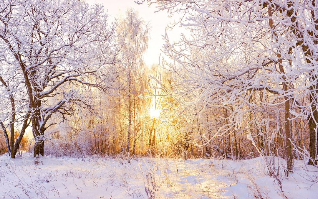 Seven Ways to Beat the Winter Blues