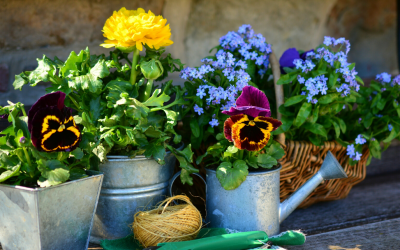 Your Guide to Gardening On A Budget