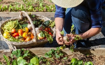 Five Tips for Planting a Vegetable Garden