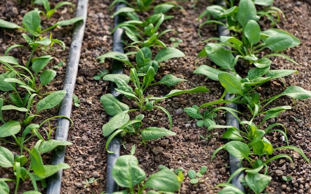 Six Water Conservation Tips For Your Home Garden