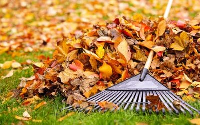 Six Tips for Improving Your Fall Lawn Care