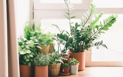 Six Plant Care Tips for A Green Home